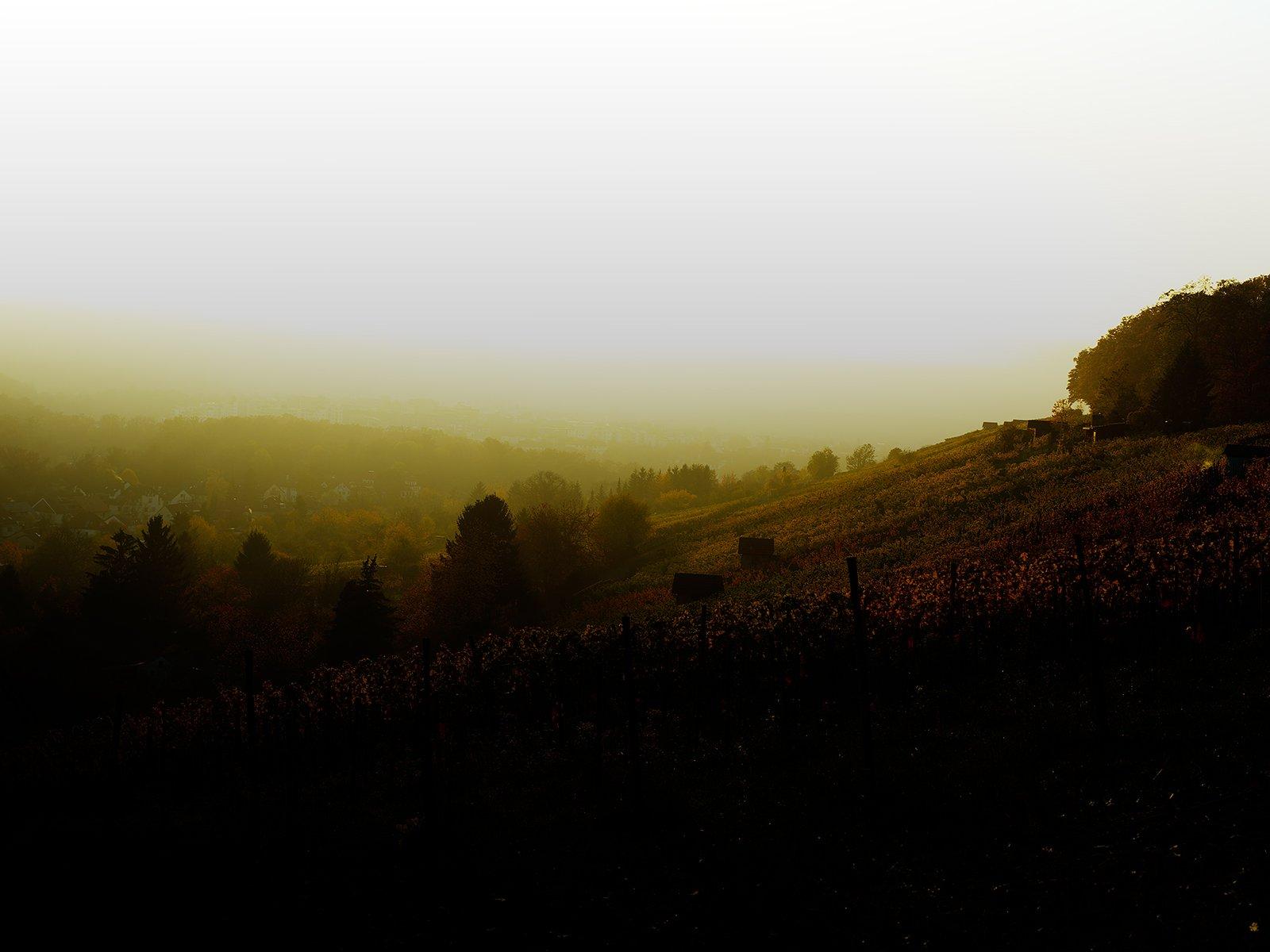 Sunset at the Stuttgart wineyards…